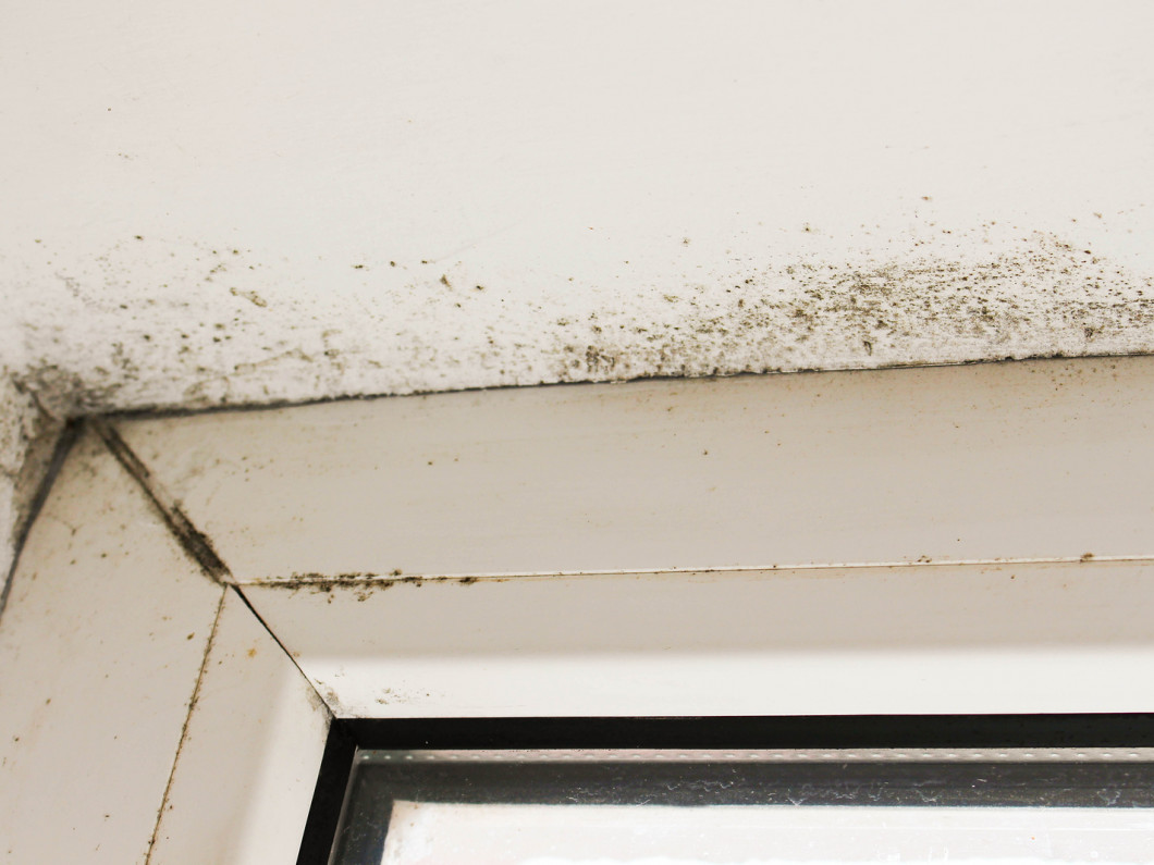 How to safely remove mold